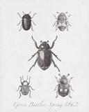 Woodland Insects II Impressão giclée por Maria Mendez