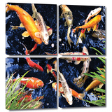 Koi 4 piece gallery-wrapped canvas Art by George Zucconi