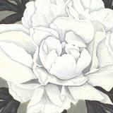 Pure Peony II Giclee Print by Kate Mawdsley
