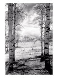 Aspen Vista Prints by Scott Peck