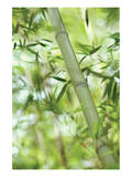 Bamboo I Print by Karin Connolly