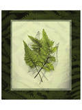 Japanese Painted Fern Study II Posters by Melinda Bradshaw