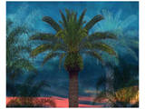 Palmae Vista I Posters by Melinda Bradshaw