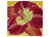 Red Day Lily II Posters by Roberta Aviram