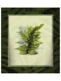 Japanese Painted Fern Study I Prints by Melinda Bradshaw