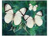 White Butterfly Fantasy Prints by Melinda Bradshaw