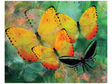 Yellow Butterfly Fantasy Prints by Melinda Bradshaw
