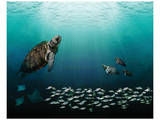 Sea Turtles Prints by Melinda Bradshaw