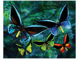 Blue Butterfly Print by Melinda Bradshaw