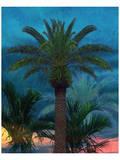 Palmae Vista III Prints by Melinda Bradshaw