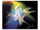 Rainbow Lily Poster by Scott Peck