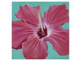 Coral Hibiscus Posters by Roberta Aviram