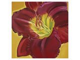 Red Day Lily I Prints by Roberta Aviram