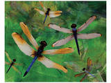 Dragonfly Fantasy Posters by Melinda Bradshaw