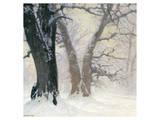 Snow Covered Oaks in the Sun Reprodukcje autor Eugen Bracht