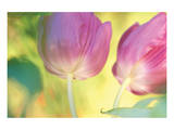 Tulip Twirl Poster by Karin Connolly