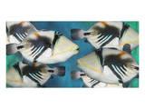 Huma Picasso Triggerfish II Poster by Melinda Bradshaw