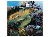 Sea Turtle IV Prints by Melinda Bradshaw