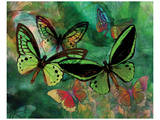 Green Butterfly Fantasy Prints by Melinda Bradshaw