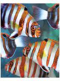 Harlequin Tusk II Poster by Melinda Bradshaw