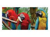 Macaws Print by Melinda Bradshaw