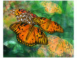 Orange Butterfly Fantasy II Poster by Melinda Bradshaw