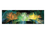 Tropical Triptych Fan Palm Prints by Melinda Bradshaw
