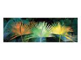 Tropical Triptych Fan Palm Prints by Melinda Bradshaw
