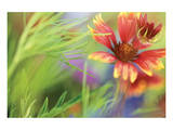 Blanket of Color Prints by Karin Connolly