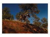 Ridge Runner Posters by Steve Hunziker