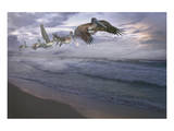Pelican Plight Art by Steve Hunziker