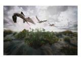 Sunset Pelicans Posters by Steve Hunziker