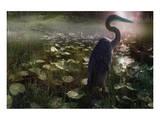 Mystic Heron Prints by Steve Hunziker