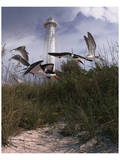 Lighthouse Terns II Prints by Steve Hunziker