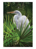 Palmetto Egret Prints by Steve Hunziker