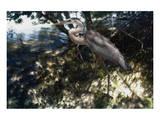 Mangrove Heron Posters by Steve Hunziker