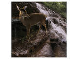 Deer Falls Posters by Steve Hunziker