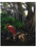 Spoonbill Plight Prints by Steve Hunziker