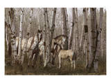 Birchwood Family Prints by Steve Hunziker