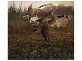 Morning Geese Poster par Steve Hunziker