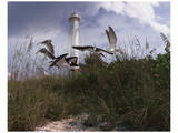 Lighthouse Terns I Prints by Steve Hunziker