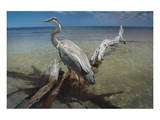 Heron Crossroad Prints by Steve Hunziker