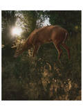 Deer Light Posters by Steve Hunziker