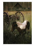 Wagon Pony Prints by Steve Hunziker