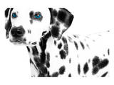 Dalmatian Date II Posters