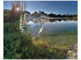 Egret Sunrise Prints by Steve Hunziker