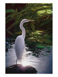 Egret Light Posters by Steve Hunziker