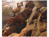 Rocky Bighorn Prints by Steve Hunziker