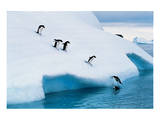 Penguins Jumping Of Glacier Prints
