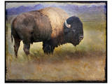 Bison I Print by Chris Vest